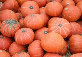 pila de calabazas naranjas foto