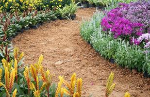 Colorful flowers along a pathway