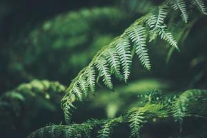 Close-up of green leaves of fern photo
