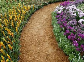 Pathway with blooming flowers photo