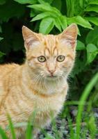 Stray cat portrait photo