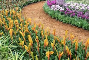 Colorful flowers and a pathway photo