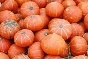 Lots of orange pumpkins photo