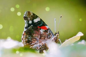 hermosa mariposa en una flor foto