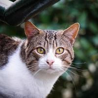 Grey stray cat portrait