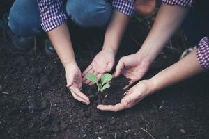 Farmers planting trees In the soil photo