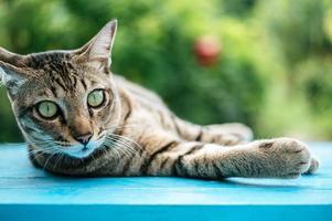 Tabby cat on blue surface photo