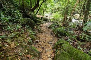 bosque abundante en tailandia foto