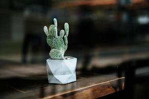 árboles de cactus en macetas, enfoque selectivo