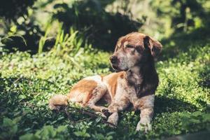 Gog sunbathing on grass photo