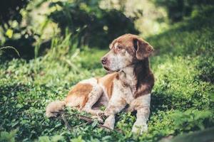 Dog sunbathing on grass photo