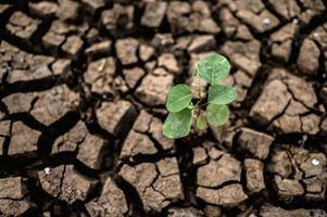 árbol que crece en suelo seco y agrietado foto