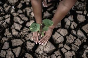 dos manos plantando árboles en suelo seco y agrietado foto