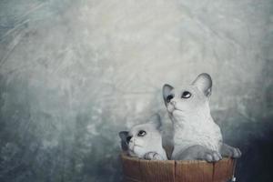 dos muñecos de gato con espacio de copia
