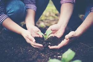 Farmers planting trees In the soil