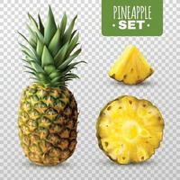 realistic pineapple set vector