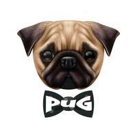 realistic pug dog portrait vector