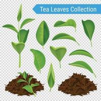 realistic tea leaves set