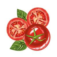 fresh healthy tomatoes icons vector