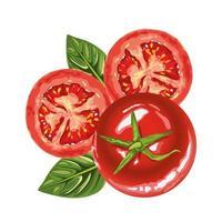 iconos de tomates frescos y saludables vector