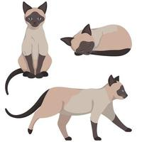 Siamese cat in different poses. vector