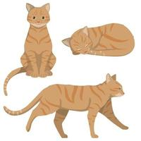 Red-headed cat in different poses. vector