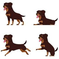 Rottweiler in different poses. vector