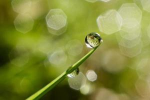 Water drop on the green grass blade