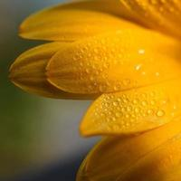 hermosa planta de flor de margarita naranja en la naturaleza foto