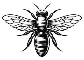 abeja de miel de vector blanco y negro en estilo de grabado sobre fondo blanco