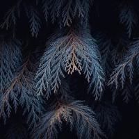 hojas de pino azul en la temporada de otoño