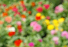 Blurry flowers for background photo