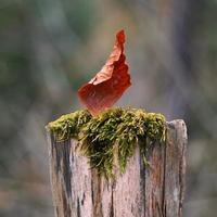 Leaf stuck on wood post