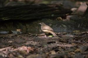 Bird on ground photo