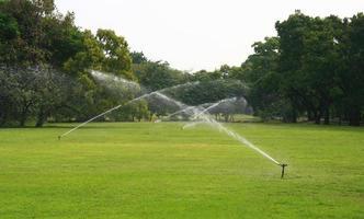 Water sprinklers watering grass