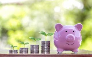 The tree that grows on the coin stack includes pig piggy banks to save money, ideas and financial and investment growth for agriculture photo