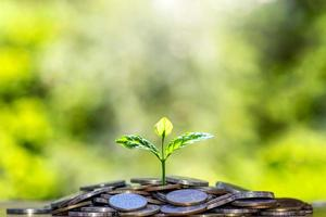 The seedlings that grow on a pile of coins include a blurred green nature backdrop, the idea of saving money and economic growth