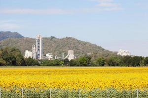 Factory at the sunflower field in Thailand