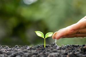 los agricultores están regando las plantas pequeñas a mano con el concepto del día mundial del medio ambiente foto