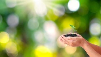 Trees are planted on the ground in human hands with natural green backgrounds, the concept of plant growth and environmental protection