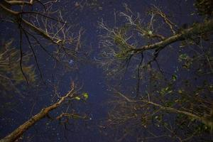 Trees and starry sky photo