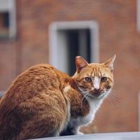 Stray cat portrait