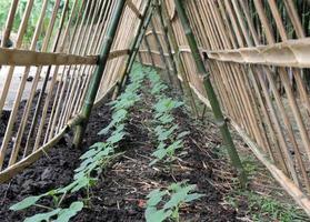 plantas que crecen con valla.
