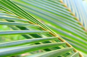 Close-up of palm leaves outside photo