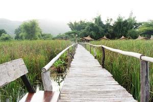 Bamboo bridge walkway on a green field photo