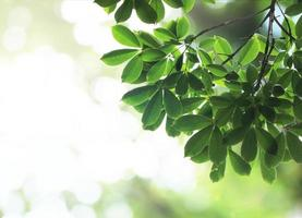 Green leaves with bokeh