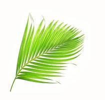 hoja de palmera tropical verde brillante foto