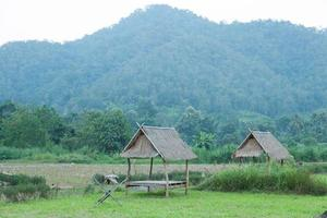 Huts on the field in rural Thailand