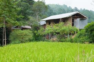 House at the rice field in rural Thailand