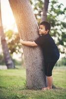 Boy climbing tree in the park photo